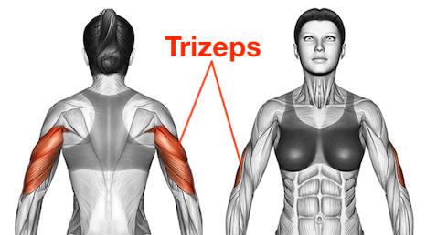 Foto von dem Trizeps Muskel de Frau, auch Winkearme Muskeln genannt.