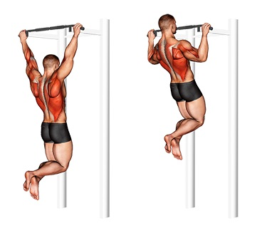 Übungen Latissimus:Foto von der Übung breite KlimmzügeObergriff.