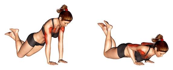 Winkearme trainieren ohne Geräte: Foto von der Übung EngeLiegestütze kniend.