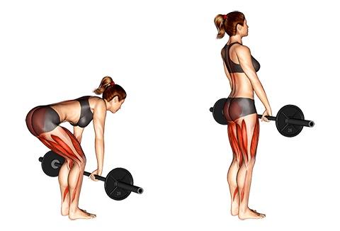 Langhanteltraining Frauen: Foto von der Übung Kreuzheben mitLanghantel.