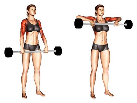 Langhanteltraining Frauen: Foto von der Übung Rudern aufrecht mitLanghantel.