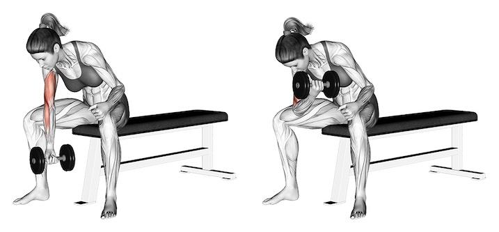 Bizeps Übungen Frauen: Foto von der Übung Bizeps mit 1 Kurzhantel sitzend.