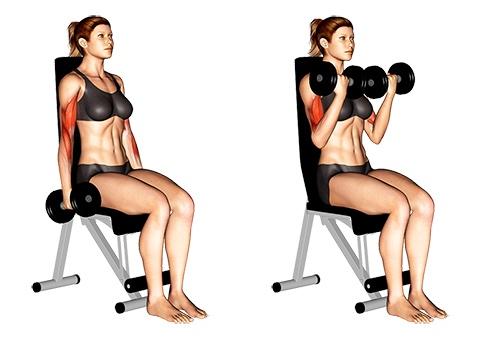 Bizeps Übungen Frauen: Foto von der Übung Bizeps mit 2 Kurzhanteln gleichzeitig sitzend.