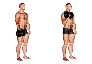 Oberarme straffen:Foto von der Übung Bizeps Kurzhantel stehend.