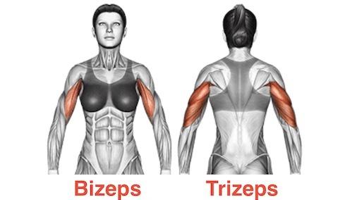 Oberarme straffen: Foto von der Bizeps und Trizeps Muskulatur einer Frau.