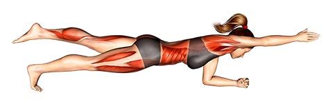 Foto von der Übung Plank Übung Bein und Arm hoch.