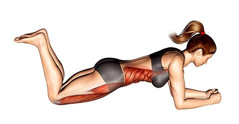 Foto von der Übung Plank Übung kniend für Anfänger.