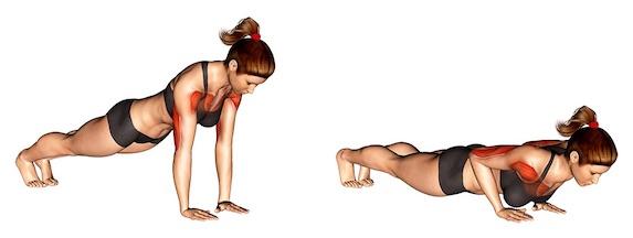 Trizeps Übungen Frauen: Foto von der Übung Liegestütze eng.